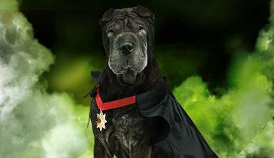 Halloween Hundekostüme