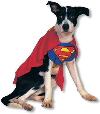 superman hunde kost m s hundekost me hundeverkleidung kost me f r hunde horror. Black Bedroom Furniture Sets. Home Design Ideas