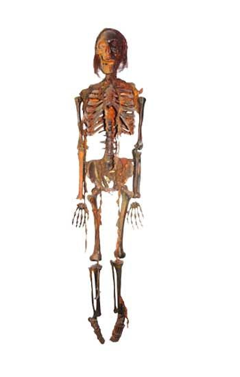 Lifesize Mummified Plastic Skeleton