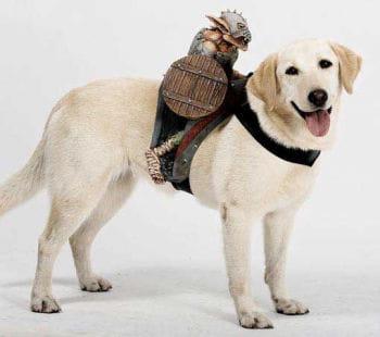 Reitender Goblin  Hundekostüm