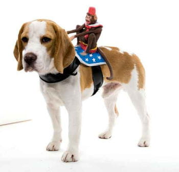 Riding Monkey Dog Costume