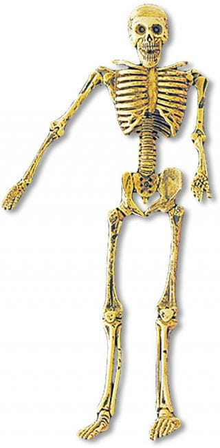 Portable Mini Skeleton
