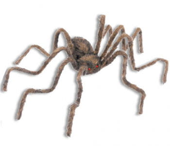 Haired giant spider brown