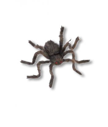 Hairy Horror spider brown