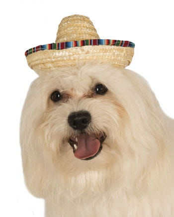 Bunter Sombrero für Hunde