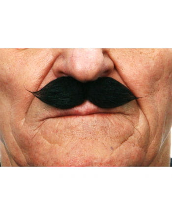 Gentleman Schnauzer Black