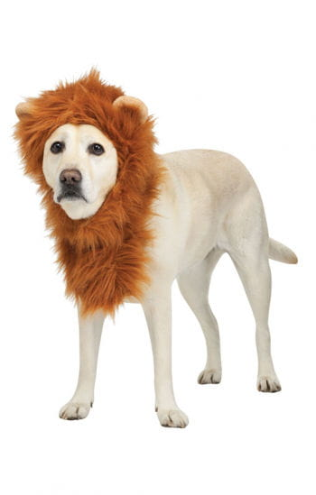 Lion`s mane for dogs