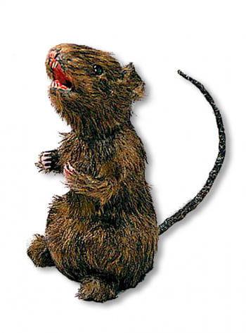 Haarige Ratte stehend