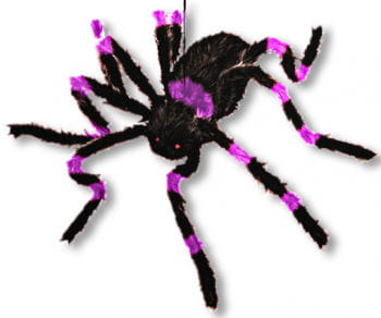 Haired giant purple spider