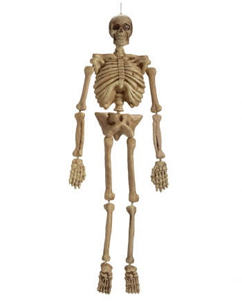 Kunststoff Skelett 152cm