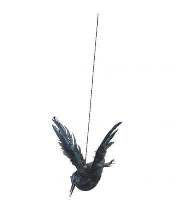 Rabe mit aufgestellten Flügeln