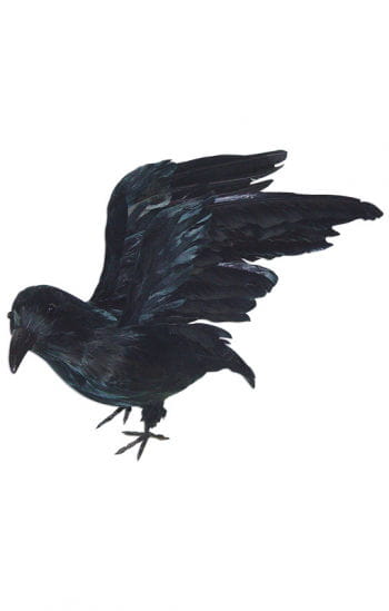 Raven with Outstretched Wings