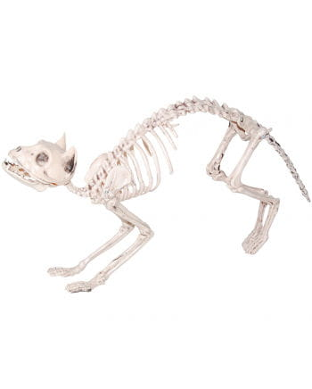 Skeleton Cat Plastic