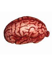 Fresh brain