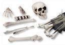 Kunststoff Knochen 18-teilig