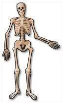 Skelett Türkdekoration