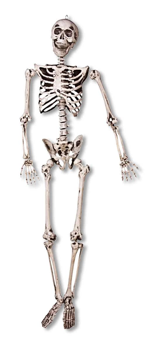 mensch skelett 3d