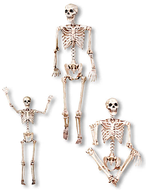 biegsames skelett 152 cm skelett menschliche knochen gerippe horror. Black Bedroom Furniture Sets. Home Design Ideas