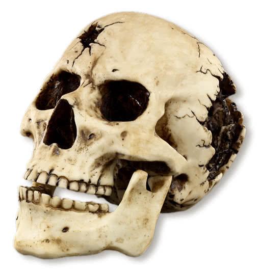 Bullet Hole Skull Prop -Broken Skull-Gothic Skull